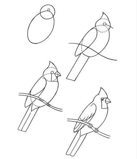 鸟怎么画简笔画