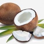 椰子或将替补母乳的营养