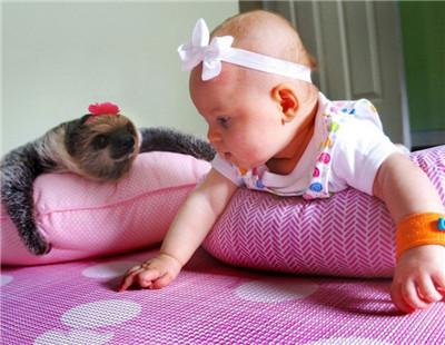 可爱萌娃宠物组合电脑壁纸