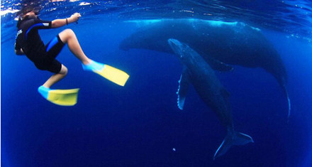 成群的鲸鱼每年都会到