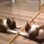 初次看到镜子里的自己 狗BB吓尿了
