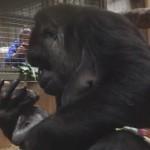 抱着儿子亲个不停 大猩猩升级当妈母爱爆棚