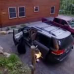 熊妈妈拖家带口 一起参观人类汽车