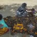 印度这个传统绝了:把宝宝丢到牛粪里,祈求好运