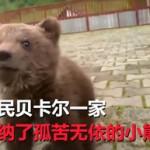 小熊崽被善良村民收养,康复后求摸摸