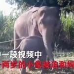 泰国驯象视频被曝光,画面残忍惹众怒