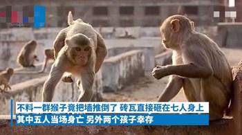 猖狂猴子把墙推倒,砸死母子五人