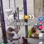 11岁男孩残忍凌虐小猫,家长拒绝道歉赔偿:他还只是个孩子!