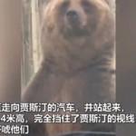 """熊妈妈与猎人相遇,站起来""""示威""""保护幼崽通过"""