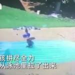眼见好友溺水,3岁娃拼尽全力成功救出