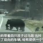"""熊妈妈带娃过马路,被""""熊娃""""折腾得够呛!"""